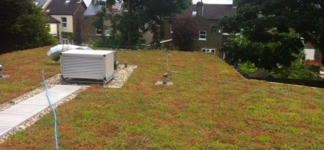 Green Roof Installation | Bromley, Kent, London | Roof Control